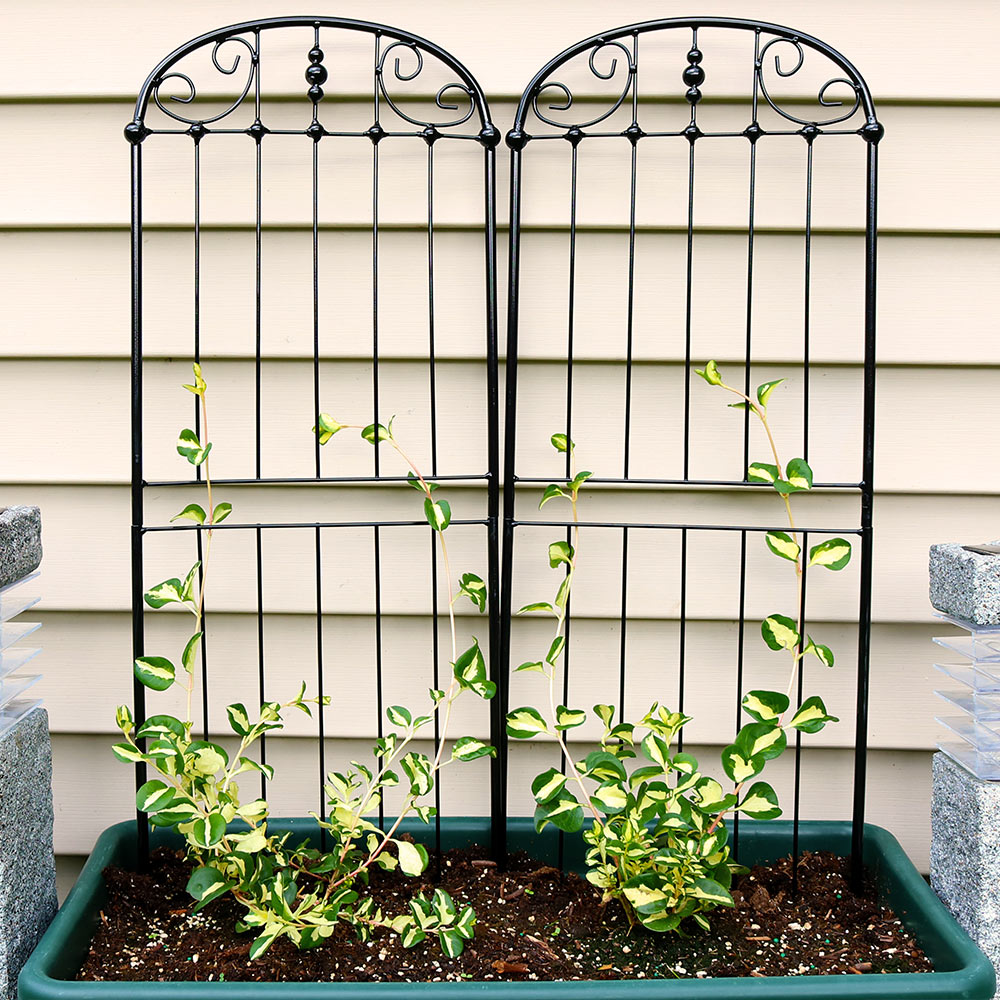 Sunnydaze 32-Inch Traditional Garden Trellis, Metal Wire for Climbing Plants and Flowers, Set of 2